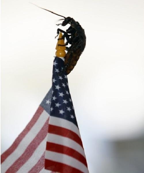 roach flag v2