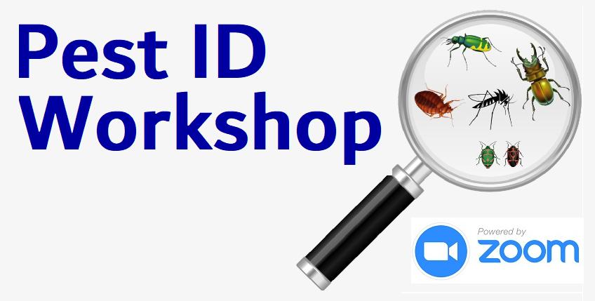 Pest ID Workshop
